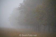 2019-Hoge-Veluwe-monchrome-05