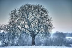 2019 Winter Pannesheide-21