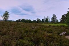 2020-Lueneburger-Heide-1