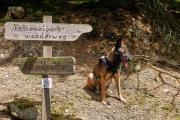 2016 Wanderung Eifel-DSC03507