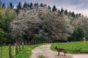 2016 Wanderung Eifel-DSC03515