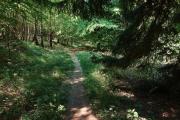 2016 Wanderung Eifel-DSC03589