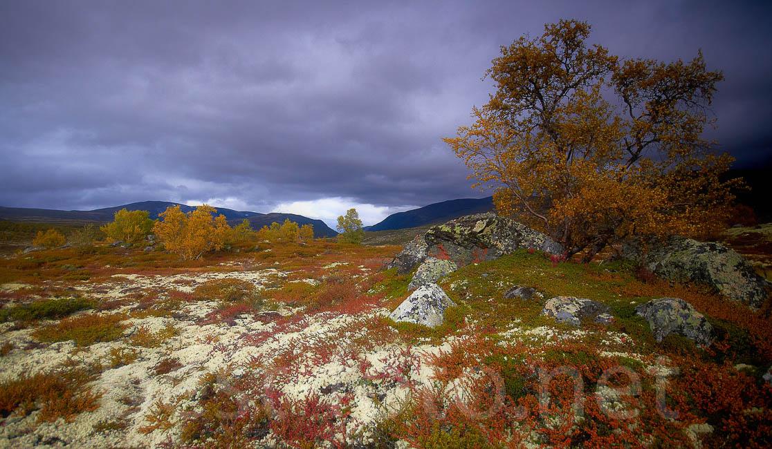 Dovrefjell_2012-7DIMG_3375_1