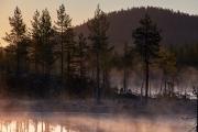 morgentliche Nebel im Moor