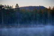 Nebel und Dämmerung im Moor in Schweden