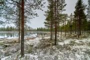 Schneefall an einem Frühlingstag in Mittelschweden