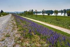 Radtour an der Donau - hinter Straubing auf dem Donauradweg