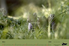 Kalender2020-01
