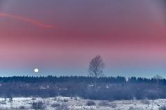 Winternacht im Hohen Venn kurz vor Sonnenaufgang