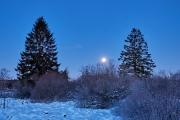 Winternacht im Hohen Venn