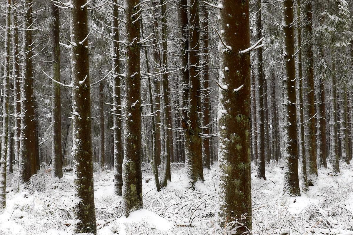 Winter in der Eifel und im Hohen Venn-01
