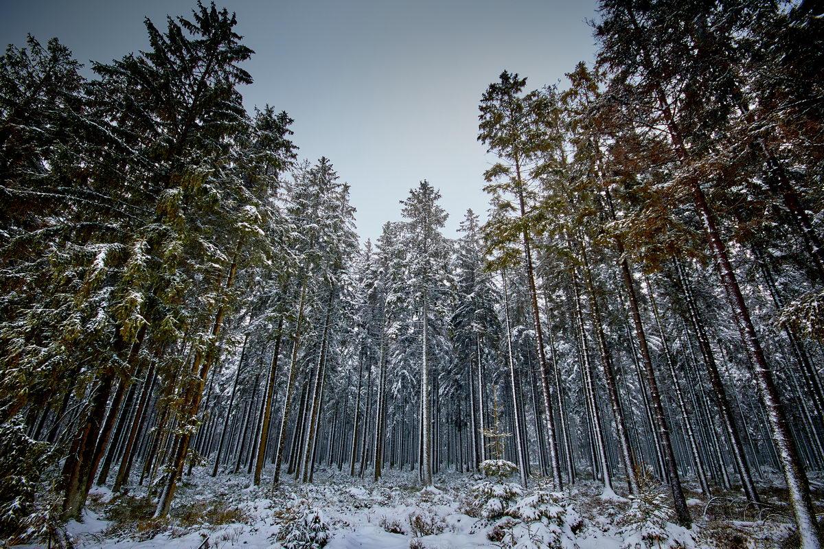 Winter in der Eifel und im Hohen Venn-10
