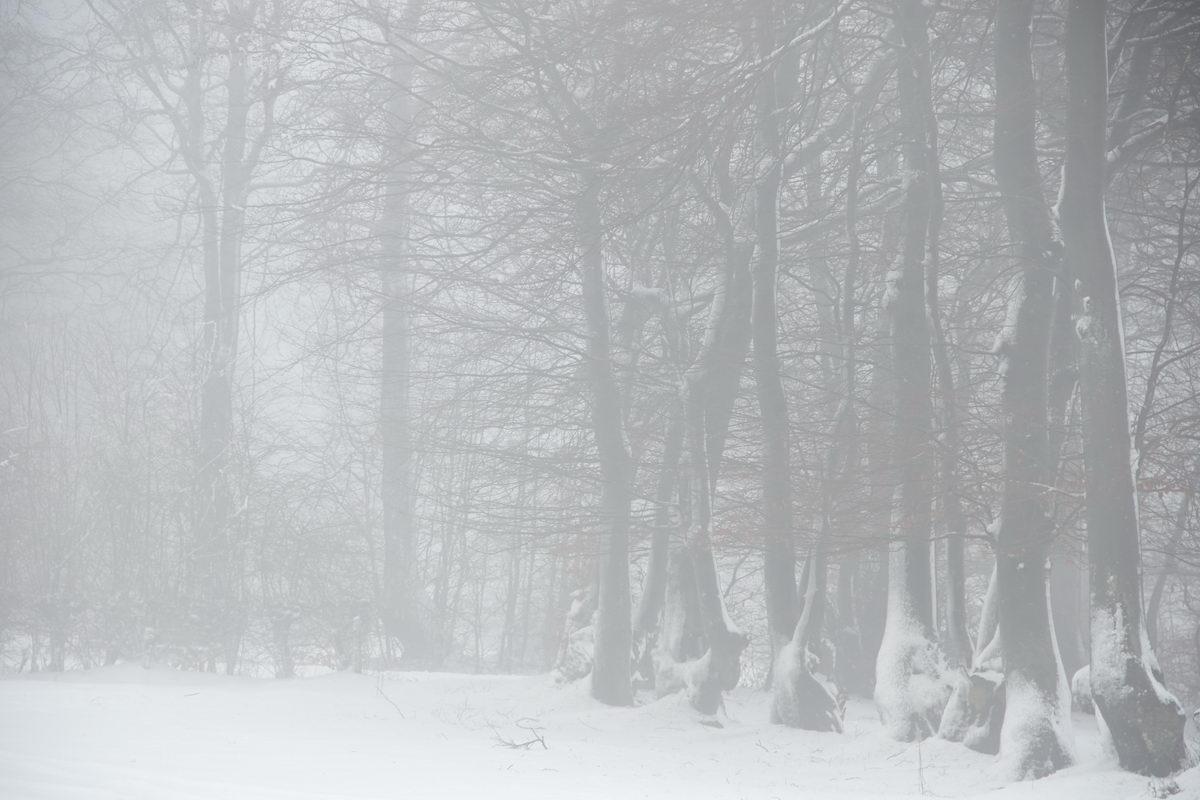 Winter in der Eifel und im Hohen Venn-19