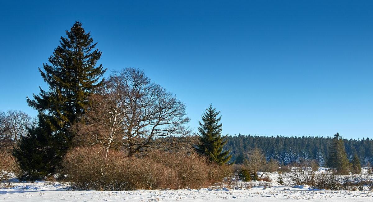 Winter in der Eifel und im Hohen Venn-23