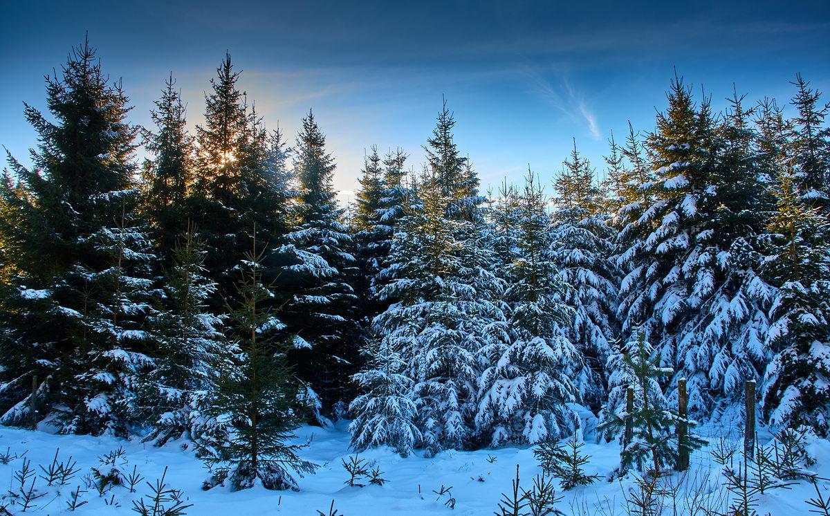 Winter in der Eifel und im Hohen Venn-26