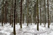 Winter in der Eifel und im Hohen Venn-02