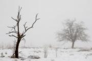 Winter in der Eifel und im Hohen Venn-04
