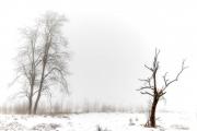 Winter in der Eifel und im Hohen Venn-05