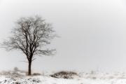 Winter in der Eifel und im Hohen Venn-06
