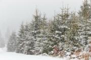 Winter in der Eifel und im Hohen Venn-08