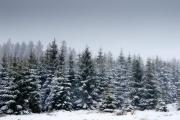 Winter in der Eifel und im Hohen Venn-09