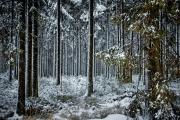 Winter in der Eifel und im Hohen Venn-11
