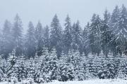Winter in der Eifel und im Hohen Venn-14