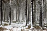 Winter in der Eifel und im Hohen Venn-17