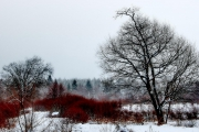 Winter in der Eifel und im Hohen Venn-18