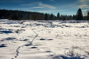 Winter in der Eifel und im Hohen Venn-24