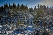 Winter in der Eifel und im Hohen Venn-25